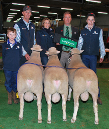 ulandi park interbreed group 3 rams adelaide 2012